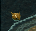 Puffer-fish taken from the water.PNG