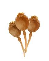 File:Poppy-heads-lrg.png