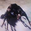 RFF-Beetle-0