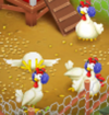 Chickens Winter