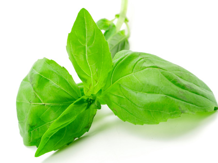 File:Fresh basil.jpg