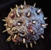 Furion orb