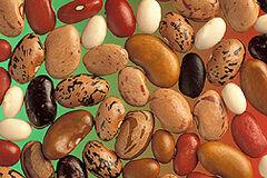 Diferentes semillas de judías