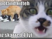 Poland kitteh