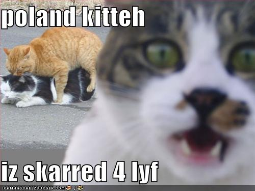 File:Poland kitteh.jpg