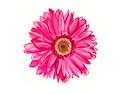 File:Pink zps287d110d.png