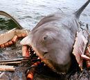 Bruce the Shark (Jaws)