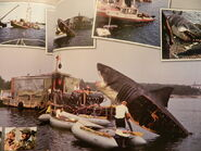Marthas-vineyard-jaws-2