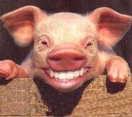 Smilingpig