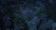 Edgewing attacking Night Terrors