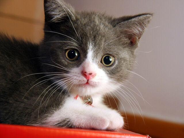 File:Animals Cats Small cat 005241 .jpg