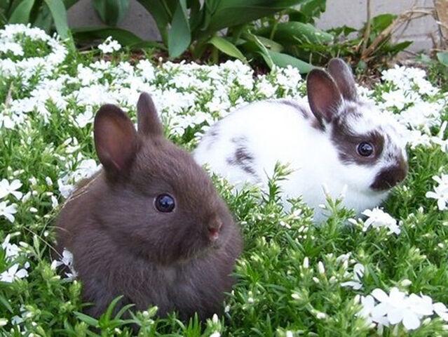 File:Bunny Wunny.jpg