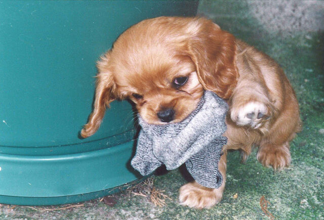File:Nya's Puppy.jpg