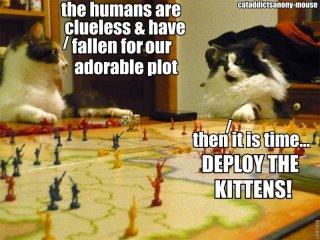 File:Cats Plotting.jpg
