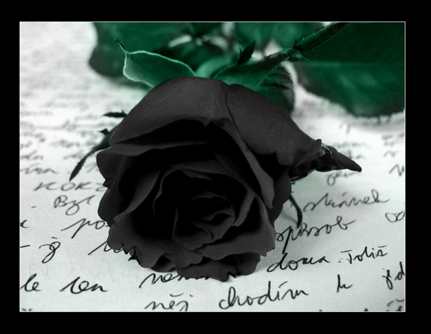 File:Black rose.png