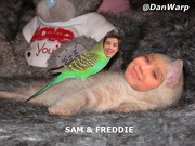 File:180px-Dan Sam Freddie by iCarly.jpg