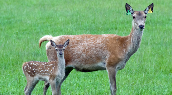 File:Deer park.jpg