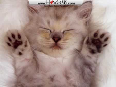 File:Adorable-Cats-Screensaver (1).jpg