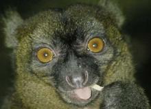 Lemur! (This is me!)