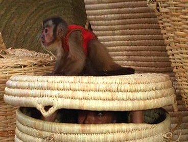 File:CapuchinMonkey.jpg