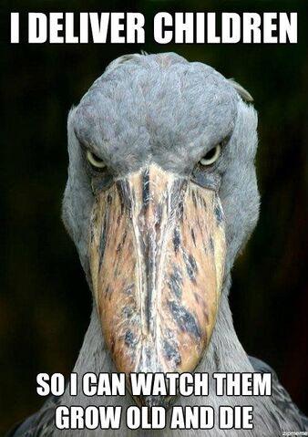 File:Evil-stork-meme.jpg
