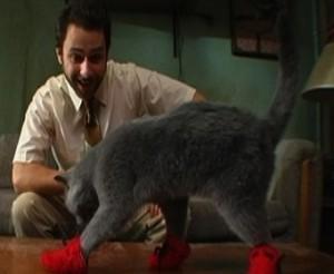 File:Kitten-mittens2.jpg
