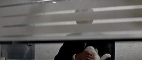 Blofeld (Dawson/Pohlmann)