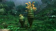 Pinapple Plant