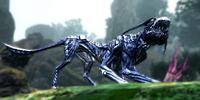 Leucomelas Viperwolf