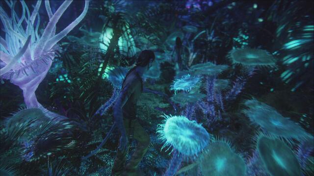 File:Bioluminescent beauty.jpg