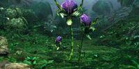Mantis Orchid