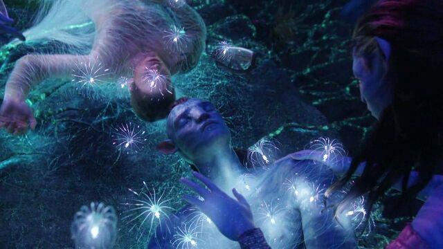File:Avatar-avatar-12322142-1280-720.jpg