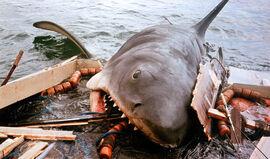 Jaws-shark-eating-boat