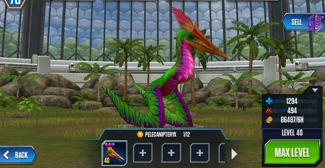 File:Pelecanipteryx (8).jpg