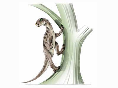 File:HeterodontosaurJPI.jpg