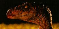 Velociraptor (movie canon)