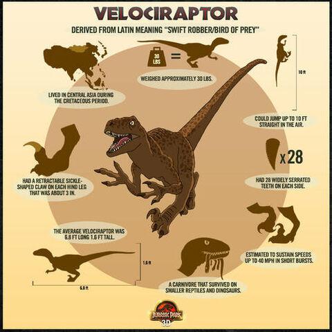 File:500x500 raptor poster.jpg
