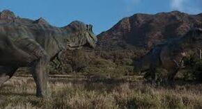 A Tyrannosaur family