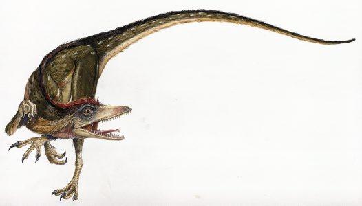 File:Sinosauropteryx.jpg