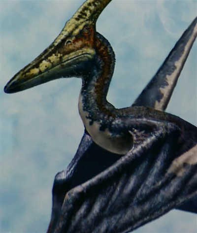 File:400px-Pteranodonwmplayer2006041418410084small4.png