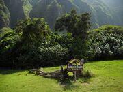 Kualoa tree
