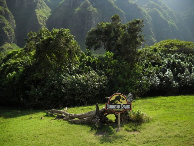 File:Kualoa tree.jpg