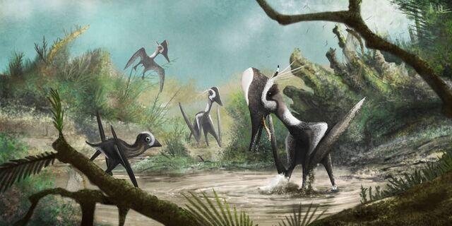 File:Pterodactylus paddles4.jpg
