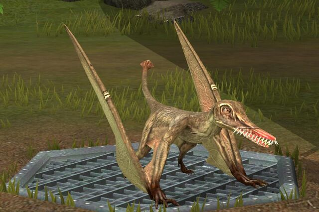 File:Rhamphorhynchus (15).jpg