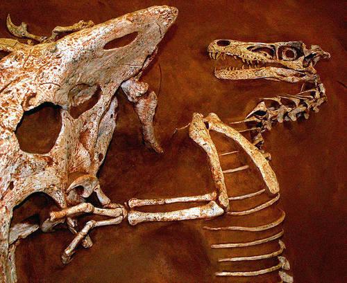 File:VelociraptorWC4.jpg