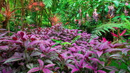 Colorful-plants