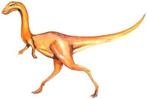 File:Procompsognathus.jpg