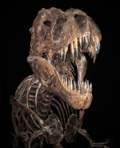 File:SkeletonT-Rex.jpg