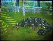 Ankylosaurus sleeping