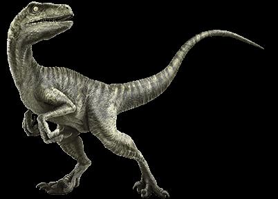 File:Velociraptor-info-graphic.png